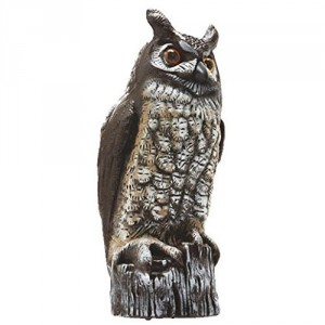 Fake Owl Woodpecker Deterrent
