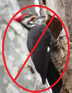 No Woodpecker 2