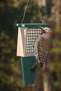 Suet Feeder Woodpecker Deterrent