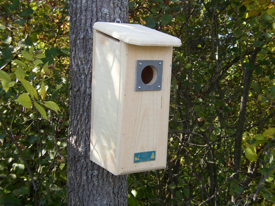 how to get rid of woodpeckers once and for all!