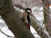 How to Get Rid of Woodpeckers on Your House: Discourage Woodpeckers with Woodpecker Deterrents!